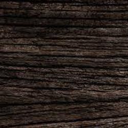 Panoramica del legno Rovere delle paludi