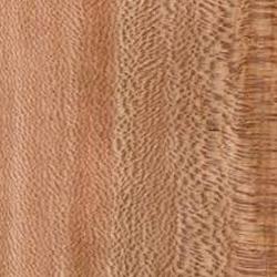 Panoramica del legno Platano